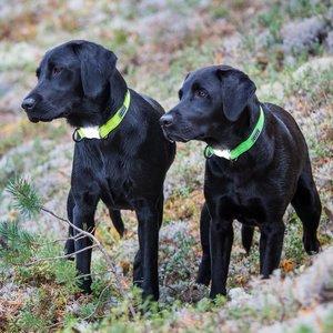 Rukka Pets Neon Light Collar - Hondenhalsband met ingebouwd veiligheidslampje