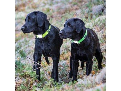 Rukka Pets Neon Light Collar - Hondenhalsband met ingebouwd veiligheidslampje - X-small, small, medium, large - Geel