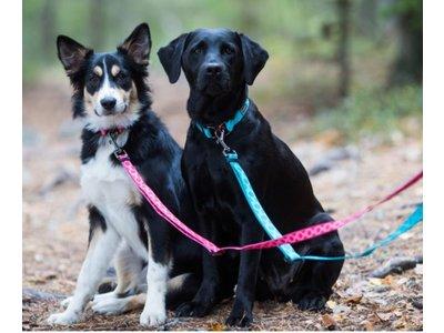 Duurzame hondenhalsband van gerecycled materiaal
