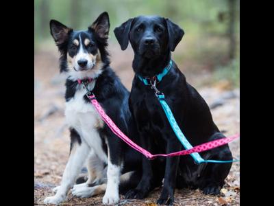 Duurzame hondenriem van gerecycled materiaal