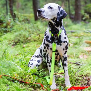 Rukka Pets Neon Bliss Adjustable Leash - Verstelbare neon hondenriem