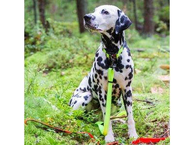 Neon verstelbare hondenriem - in drie maten