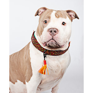 Leren Hondenhalsband met Panterprint
