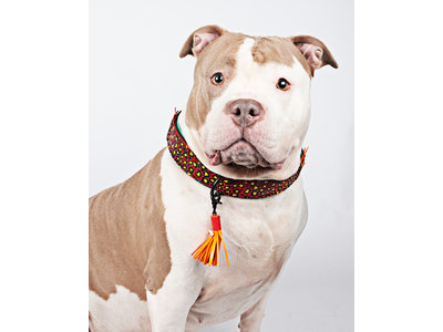 Dog With a Mission - Red Robin Collar - Leren hondenhalsband met panterprint