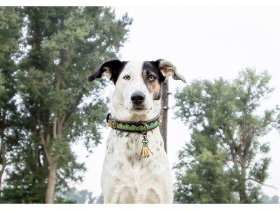 Montana Sky stoere hondenhalsband van leer en denim