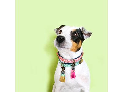 Vegan hondenhalsband Judy Blue met stoer denim
