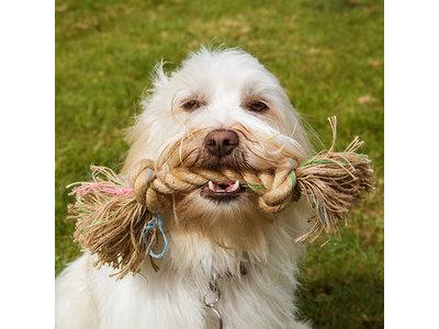 Flostouw voor Kleine en Grote Honden - Stevig en Verantwoorde Tandverzorging - Beco Pets BecoRope - In Small (25cm), Medium (35cm) of Large (47cm)