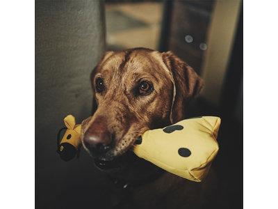 Honden Knuffel Giraffe - Duurtzaam, Extra Sterk en van Pluche - Beco Pets - S/M/L