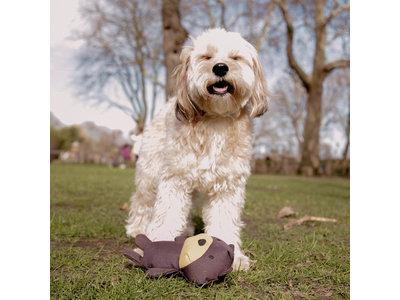 Pluche Knuffelbeer met Pieper voor Honden - Zeer Sterk & van 100% Gerecycled Materiaal - Beco Pets - S/M/L