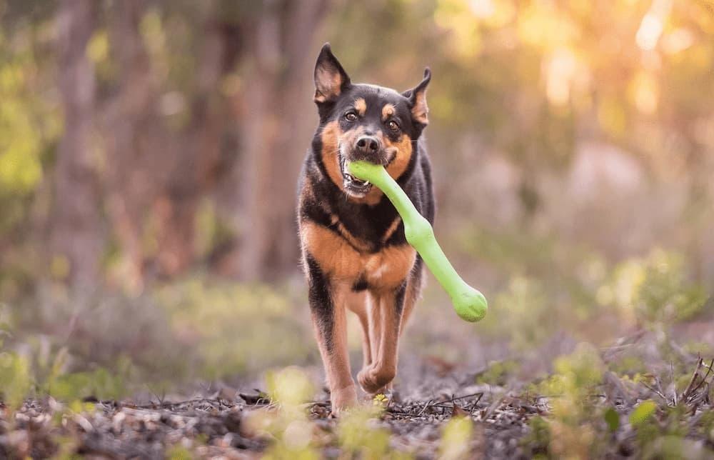 Werpstok voor Honden Sterk en Flexibel - West Paw Zwig