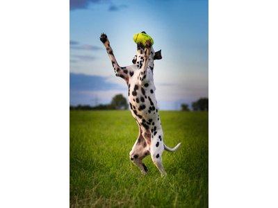 Kong American football met pieper - Voor Apporteerspel - Veilige bal voor je hond - Alternatief voor tennisbal