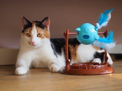 Doc & Phoebe's Twirly Bird Snacker - Interactief snackspeeltje voor katten - Draaiend puzzelspeelgoed met snacks - Stimuleert het jachtinstinct van je kat – Kattenspeelgoed voor katten met veel energie