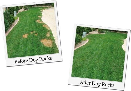 Dog Rocks - voor en na