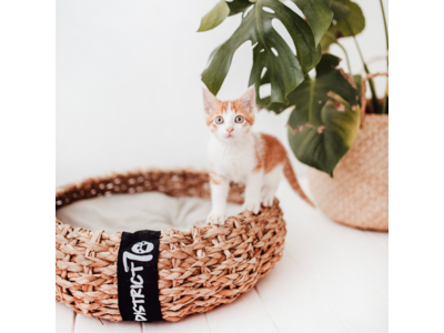 Kattenmand van Luxe, Duurzaam Hoogwaardig Riet met zacht uitneembaar kussentje- District 70 COCOON - Maten S/M/L