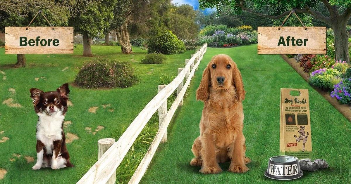 Dog Rocks Natuurstenen - Voorkom Gele of kale plekken in het gras