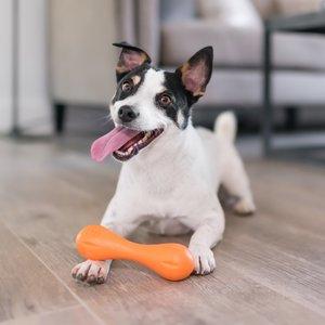 West Paw Hurley® met Zogoflex - Honden Kauwbot