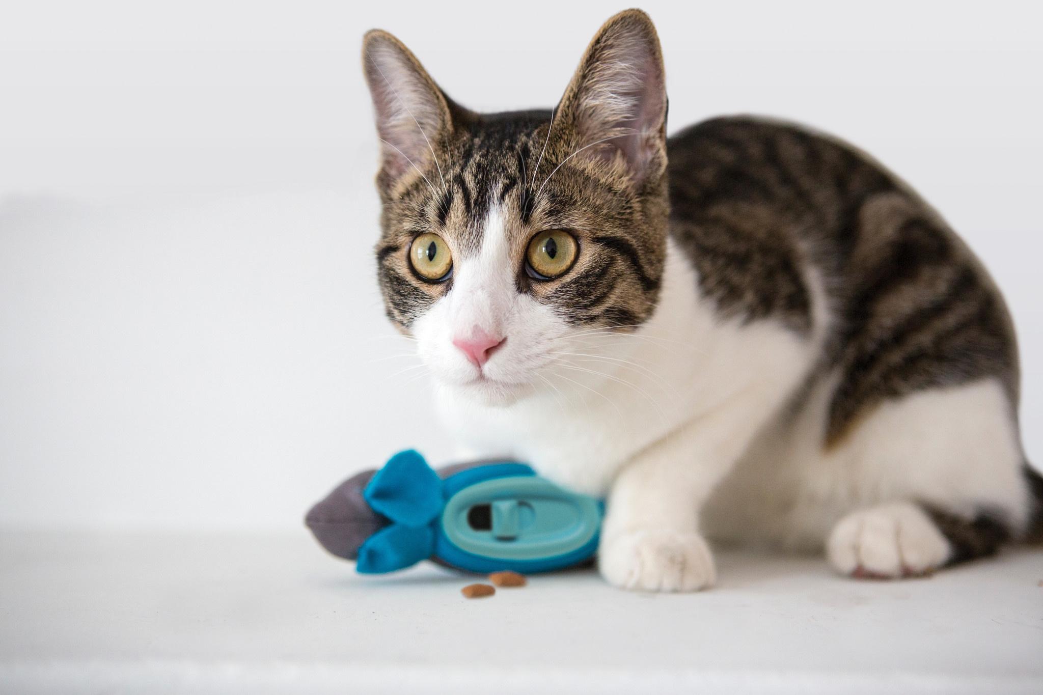 Doc & Phoebe's Hunting Snacker - Interactief snackspeeltje voor katten