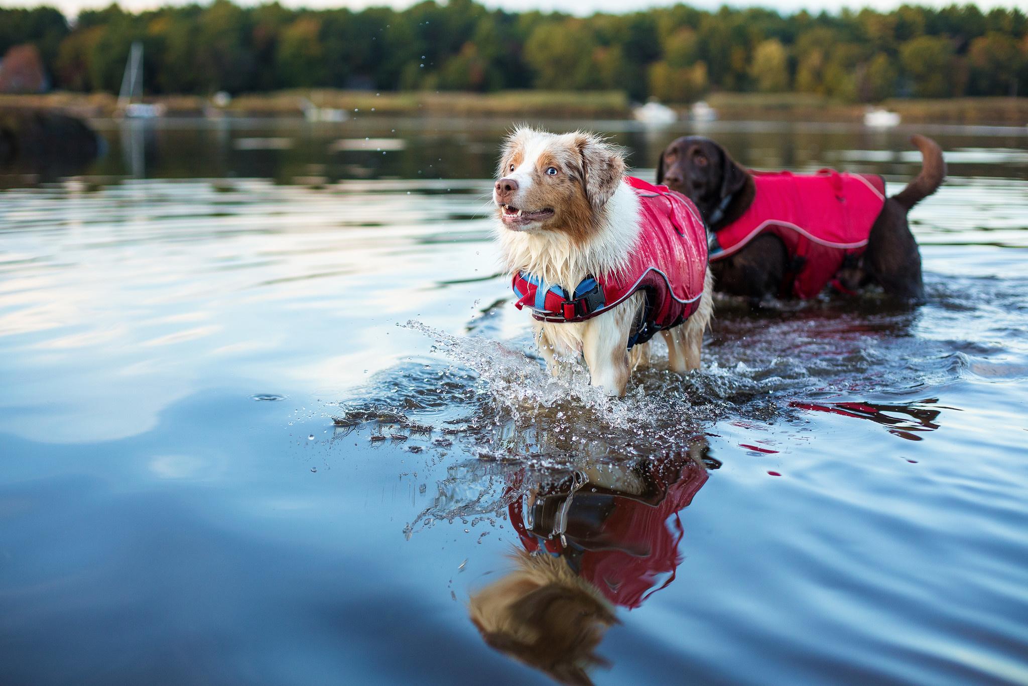 Zwemvest voor honden