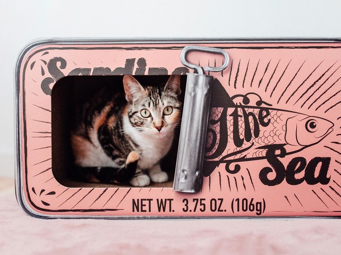 Design Katten Krabmeubel van gerecycled karton - District 70 Sardine