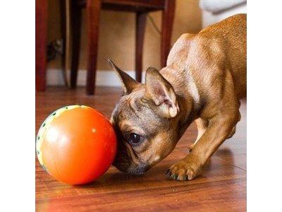 Outward Hound Treat Chaser - Interactieve hondenpuzzel - Snackbal - Geschikt voor pups en kleine honden