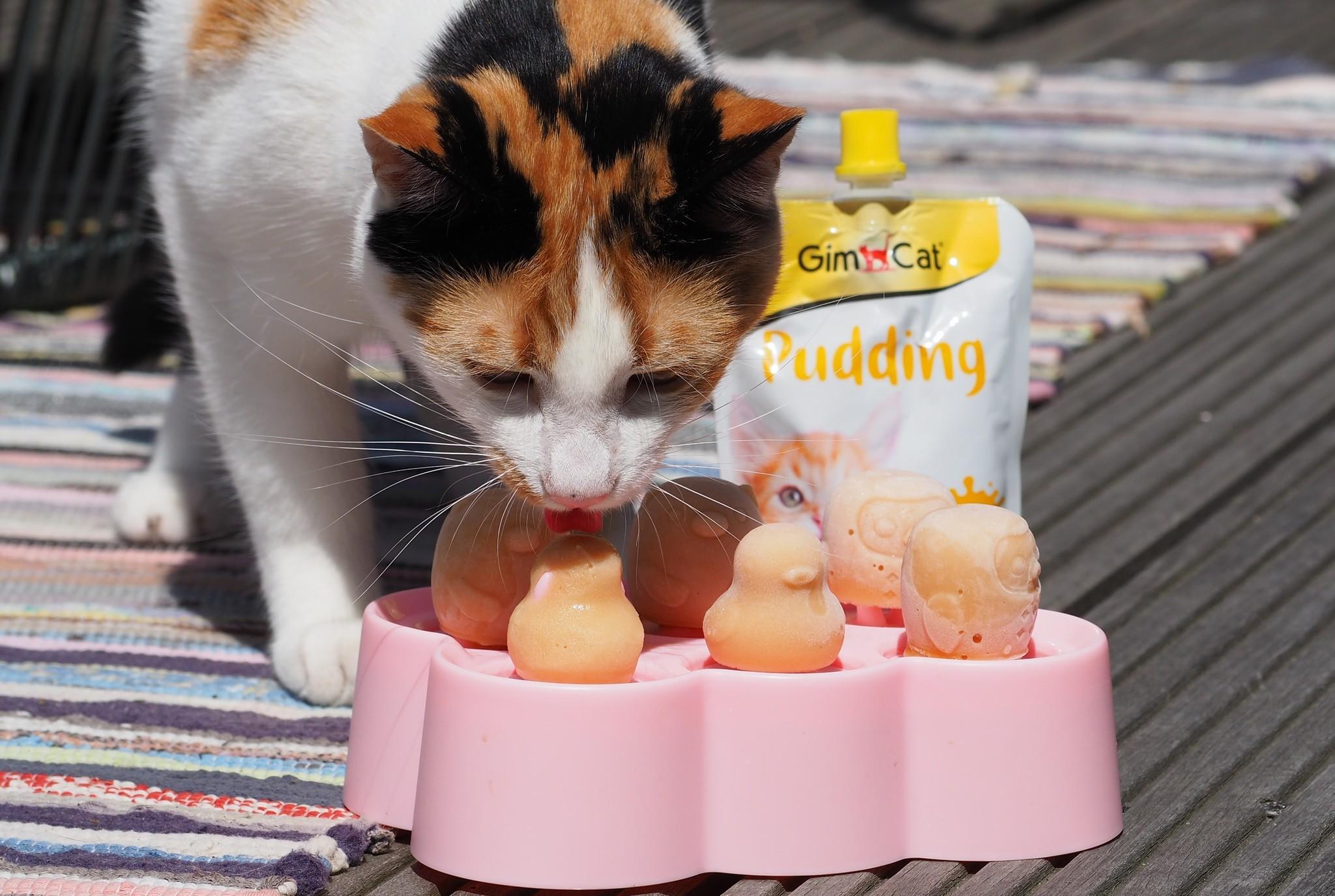 Gimcat pudding katten ijsje