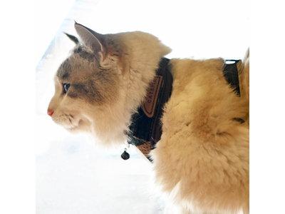 Catspia Cat Harness - Private Camo - Kattenharnas - Tuigje voor uitlaten van de kat - Veilig mee naar buiten