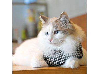 Catspia Cat Harness -Garbo Black - Kattenharnas - Tuigje voor uitlaten van de kat - Veilig mee naar buiten