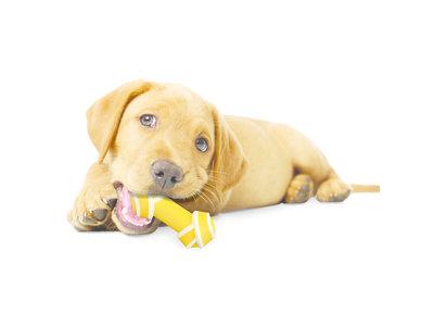Nylabone Puppy kauwbot knoop met rundvleessmaak - X-Small
