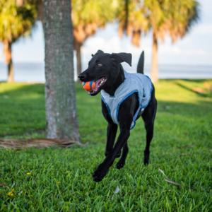 Kurgo Core Cooling Vest - Koelvest voor honden