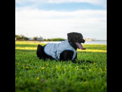 Kurgo Core Cooling Vest - Koelvest voor honden - Grijs - S / M / L / XL