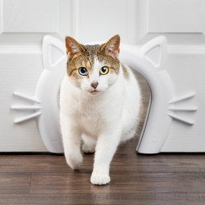 Staywell Cat Corridor