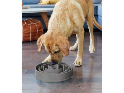 Anti Schrokbak Voerbak Honden - Outward Hound - Fun Feeder - 6 kleuren in maat XS/S/M - door Dierenartsen aanbevolen Slow Bowl