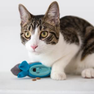 The Hunting Feeder - Interactief Kattenvoerspeeltje