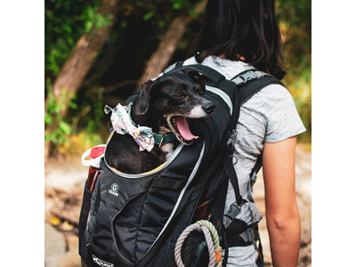 Comfortabele Hondenrugzak voor kleine honden met diverse opbergvakken voor honden tot 11kg - Kurgo G-train K9 - Rood 33x53x25cm