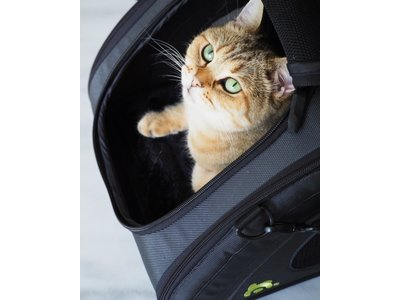 Opvouwbare Design reistas voor huisdieren- Geschikt als handbagage in vliegtuigen - Maelson Snuggle Kennel - in Antraciet