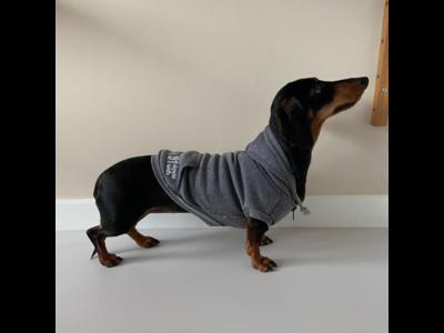 51 Degrees North - Warme College Hoodie voor jouw hond - Trui in 3 kleuren en 7 maten - Sweater met capuchon en rits