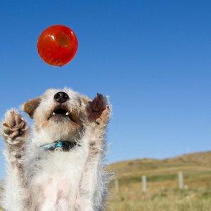 Super Sterke Stuiter Bal voor Sterke Honden