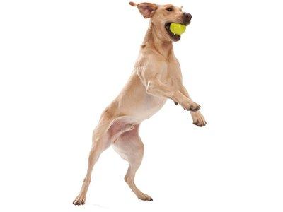Drijvende & Stuiterende Hondenbal voor Werpstok - B Corp