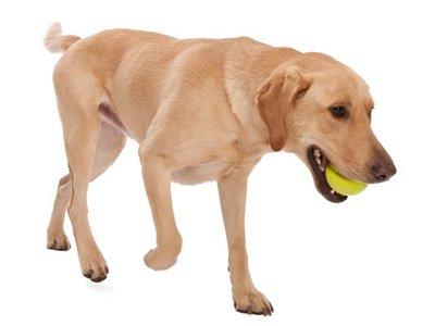 Drijvende & Stuiterende Hondenbal voor Werpstok - West Paw - Zogoflex Jive - Blauw, Groen, Oranje - XS/S/M