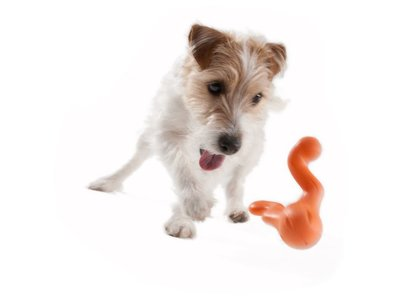 Honden spelletje om ver te gooien