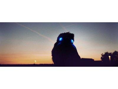 Luumi Veiligheid Hondenlampjes
