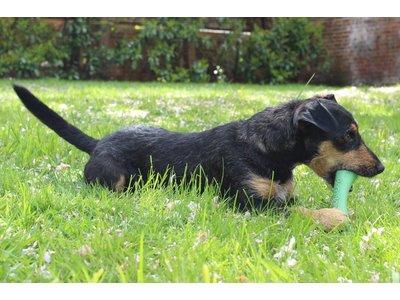 Kauwbot Flexibel van Rubber voor Hond - Beco Pets - in Groen, Blauw of Roze - Maat S/M/L