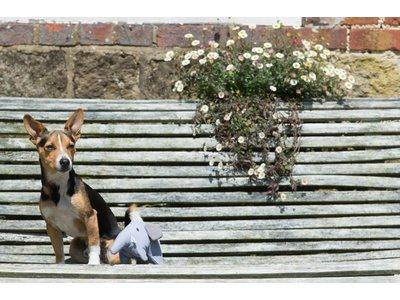 Pluche Speelgoed Olifant voor Honden van gerecycled materiaal - Beco Pets - Duurzaam en Sterk in S/M/L