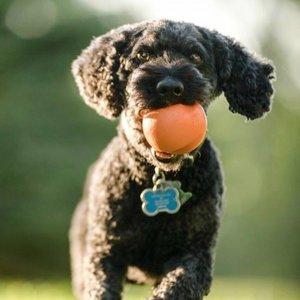 West Paw Zogoflex  Jive - Sterke Hondenbal voor Werpstok