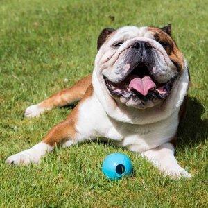 BecoBall Snackbal voor Honden