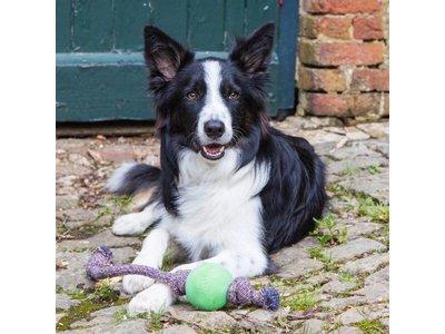 Hondenbal met Touw voor Honden in Blauw, Groen en Roze