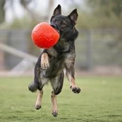 Voetbal voor Honden