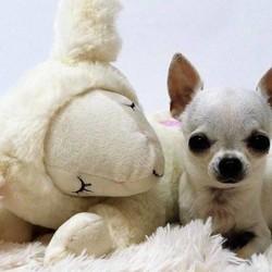 Puppy Knuffel met Hartslag - AFP