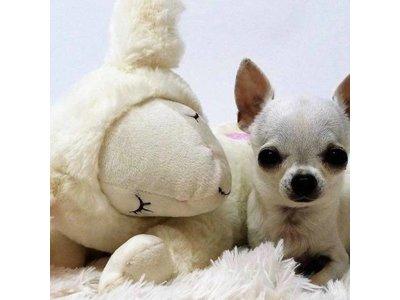 Puppy Knuffel met Kloppend Hartje waardoor je Puppy zich niet alleen Voelt