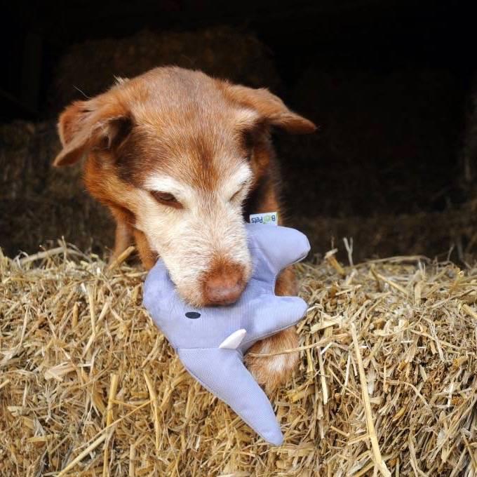 Hondenspeeltje Pluche Olifant
